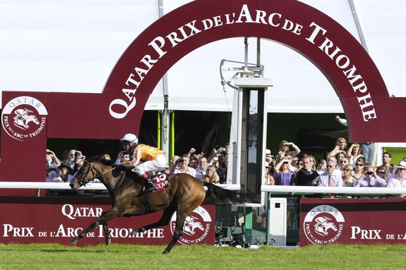 cheval au galop lors du Qatar prix de l'arc de triomphe